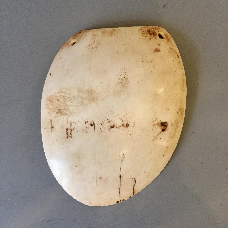 A Breast shell ornament